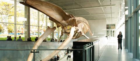 Support biodiversity outreach at the Beaty Biodiversity Museum.